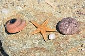 Sea Life. Starfish, Sea Urchin, Sea Shell, Clam Shell. Close Up View. Greece. Orange Starfish, Viole poster