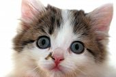 Close-up portrait of small kitten on wite background
