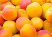 Fresh natural apricot background