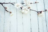 Spring Flowers On Wooden Table Background. Plum Blossom. Top View.spring Cherry Blossom On A Old Woo poster