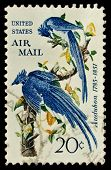 USA - CIRCA 1963: A stamp printed by USA shows a pair of blue birds from the Audubon Society, circa