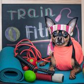 Train Hard Concept . Tranned Athletic Dog  Doing Exercises  In The Gym . Fitness And Sports Motivati poster