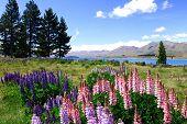 Valenders By Lake Tekapo