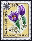 Postage stamp Austria 1986 Pasque Flower