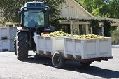 Grape Harvest Delivery
