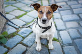 stock photo of sabbatical  - homeless dog lonely with leash and sad - JPG
