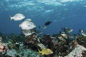 Chubby Reef Scene
