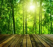 Wooden platform and Asian Bamboo forest with morning sunlight.