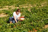 Young Woman On Organic Strawberry Farm