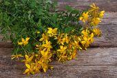 big bunch of fresh yellow flowers Hypericum