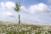 Field With Daisies And Lychnis. poster