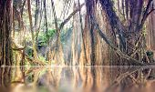 lost tranquility  lake in jungle photo. Bali