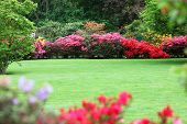 stock photo of manicured lawn  - Beautiful garden with flowering shrubs a neat manicured lawn and colourful display of pink and red azaleas - JPG