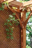 stock photo of pergola  - Pergola with latticce screen covered by hanging grapevines - JPG