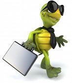 foto of turtle shell  - Turtle - JPG