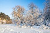 Trees,hoarfrost,frozen River