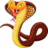 foto of anaconda  - Vector illustration of cute angry cobra cartoon - JPG