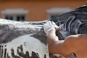groom on a stable washes a horse with foam