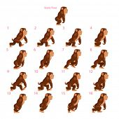 Animation of gorilla walking. Sixteen walking frames + 1 static pose. Vector cartoon isolated charac