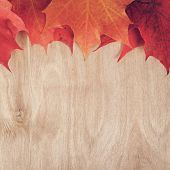Autumn Maple Leaves On Wood Table