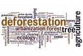 picture of deforestation  - Deforestation issues and concepts word cloud illustration - JPG