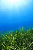 Green Grass Underwater Blue Sea seaweed