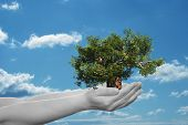 Concept or conceptual human man or woman hand holding a green summer tree and blue sky with clouds e