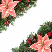 Poinsettia flower background border with fir, holly, ivy, and cedar cypress leaf sprigs over white.