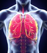 picture of respiration  - Human Respiratory System Illustration  - JPG