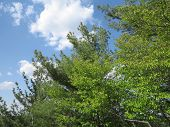 Beautiful sky withy clouds and spring time trees at Starved Rock State Park, Illinois