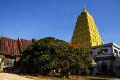 Bodh Gaya And Tree