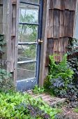 Old Greenhouse Door