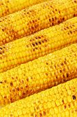Delicious golden grilled corn close-up