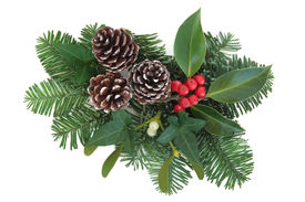 foto of greenery  - Christmas and winter greenery with holly - JPG