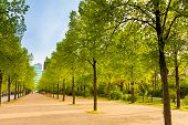 stock photo of row trees  - Tiergarten view with rows of trees in Berlin Germany - JPG