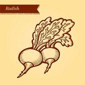 Radish retro