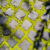 Cobbles With Moss