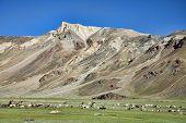Walking Sheeps Among Mountains