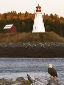 Eagle perched in front of a lighthouse