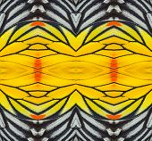 Texture From Painted Jezebel Butterfly Wing