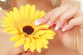 A female hand touching a flower, closeup
