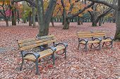 Park bench with autmn background