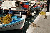 Cats watching fishermen corrects fishing net