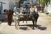 Unidentified man drives bull cart in Orchha, India.