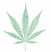 picture of reggae  - a vector illustration in the form of marijuana - JPG