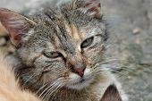 Moray Kitten