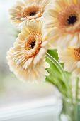 Gerberas Bouquet Close Up Image
