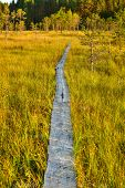 stock photo of swamps  - Traditional wooden path on finland swamp - JPG