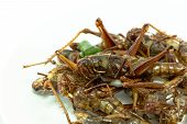 picture of exotic_food  - Fried insects regional delicacies food in Thailand - JPG