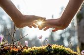 stock photo of nurture  - Close up Bare Hand of a Man Covering Small Flowers at the Garden with Sunlight Between Fingers - JPG